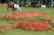 Formigas Cortadeiras - uso de plantas pouco apreciadas, resistentes ou tóxicas