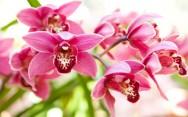 Orquídeas - formas de propagação