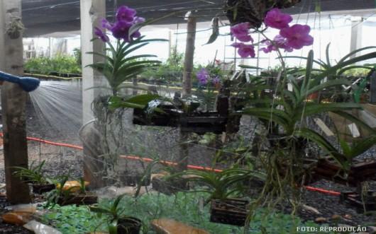 Orquídeas - irrigação