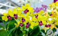 Orquídeas - adubação