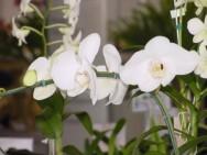 Orquídeas - luminosidade