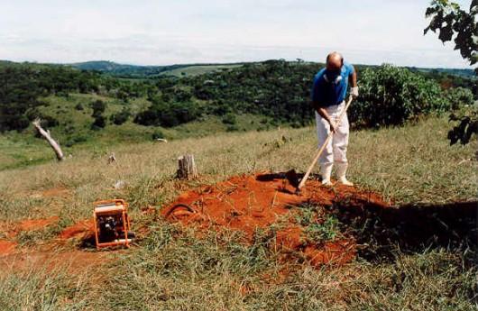 Formigas Cortadeiras - monitoramento e decisão