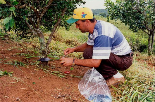 Formigas Cortadeiras - combate direto com formicidas