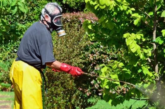 Formigas Cortadeiras - combate químico por formicida em pó