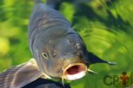 Nutrição de peixes - alimentação e fatores ambientais