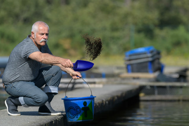 Nutrição de peixes - exigência energética    Artigos Cursos CPT