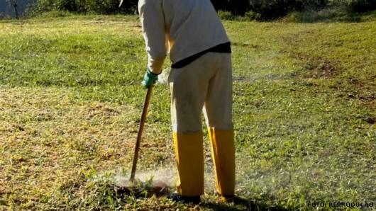 Formigas Cortadeiras - combate químico por termonebulização