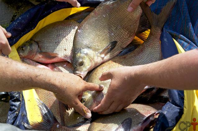 Nutrição de peixes - exigência vitamínico-mineral    Artigos Cursos CPT