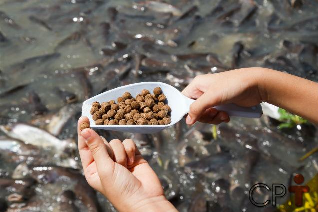 Nutrição de peixes - características dos alimentos   Artigos Cursos CPT