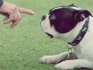 Aprenda Fácil Editora: Aprenda como adestrar seu cão