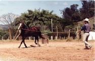 Aprenda Fácil Editora: Doma racional: a forma correta de amansar equinos