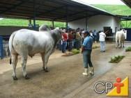 Eventos agropecuários - Exposição de Animais