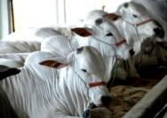 Aprenda Fácil Editora: Melhoramento genético animal