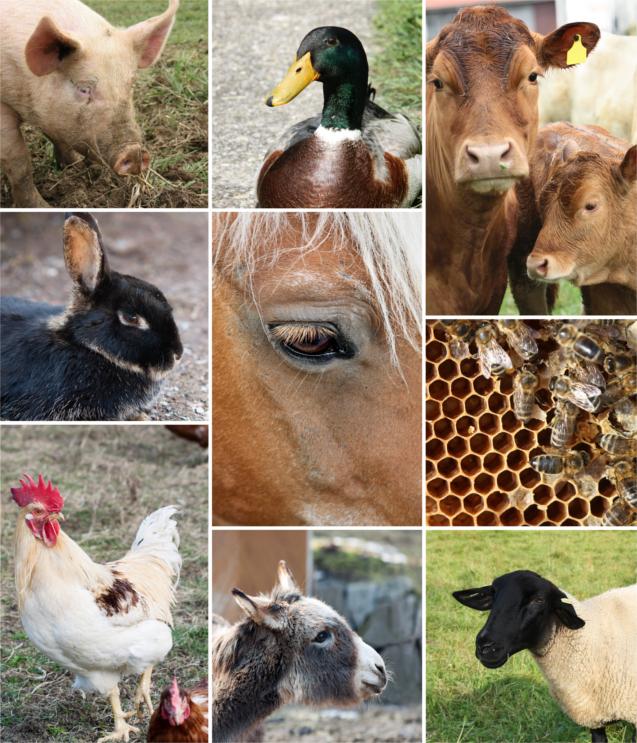 Fazenda Agrícola