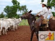 Zona de fuga e ponto de balanço em bovinos