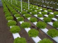 Aprenda Fácil Editora: As vantagens do cultivo hidropônico