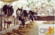 A digestão nos bovinos