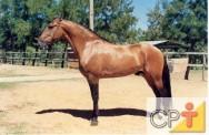 Como estimar o peso do seu cavalo