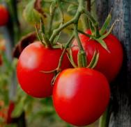 Vitamina B5: importância, fontes de alimentos, valores nutricionais, carência e excesso