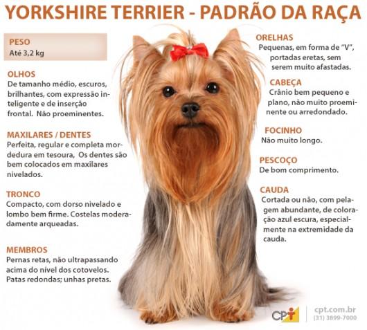 Padrão da raça Yorkshire Terrier