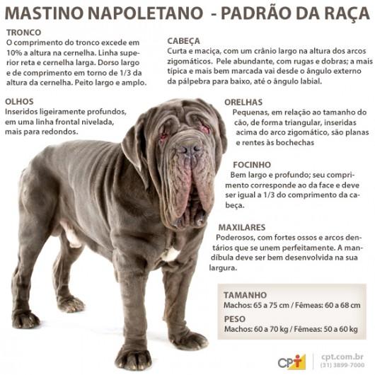 Padrão da raça mastino Napoletano