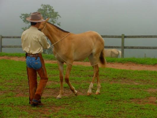 Doma natural de cavalos - etapas para a aproximação do potro xucro