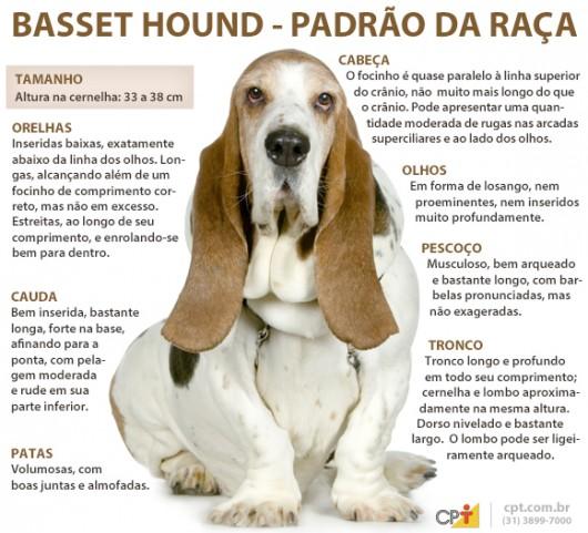 Padrão da raça Basset Hound
