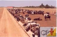 Localização e infraestrutura para confinamento bovino