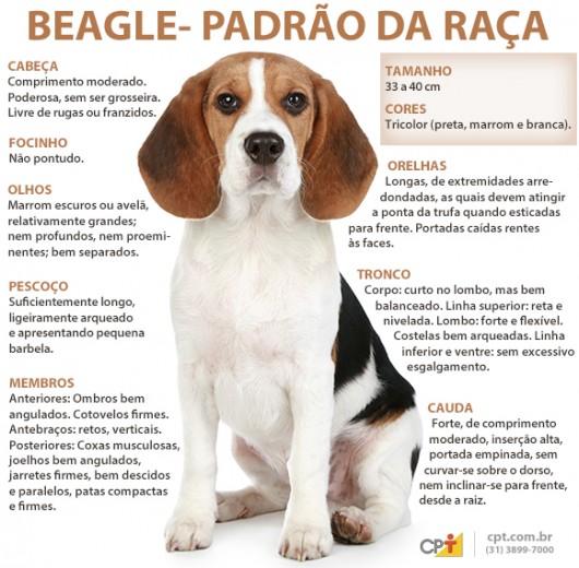 Padrão da raça Beagle