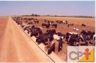 Comportamento alimentar dos bovinos - O comportamento ingestivo varia de acordo com o tipo de alimento que está sendo consumindo.