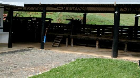 Inseminação artificial em bovinos - curral de manejo