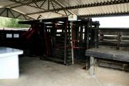 Curral de manejo de bovinos