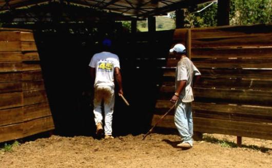Inseminação artificial em bovinos - seringa, tronco de contenção e sala de apoio