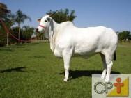 Casqueamento em bovinos