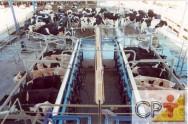 Ordenha mecânica na produção de leite