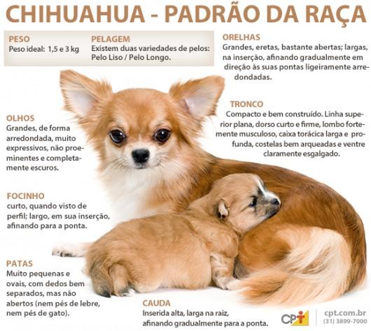 Padrão da raça Chihuahua