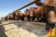 Volumosos e concentrados na alimentação de vacas leiteiras