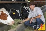 Proteína e energia na alimentação de gado de leite