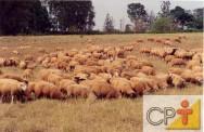 Eficiência reprodutiva em ovinos
