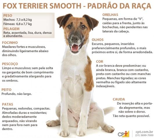 Padrão da raça Fox Terrier (Smooth)