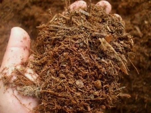 Agricultura orgânica - conceitos e fundamentos de produção do café