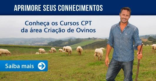 Aprimore seus conhecimentos. Conheça os Cursos CPT na área Criação de Ovinos