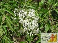Princípios ativos das plantas medicinais