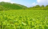 O mercado de orgânicos tem uma taxa de crescimento de 30 a 50% ao ano.