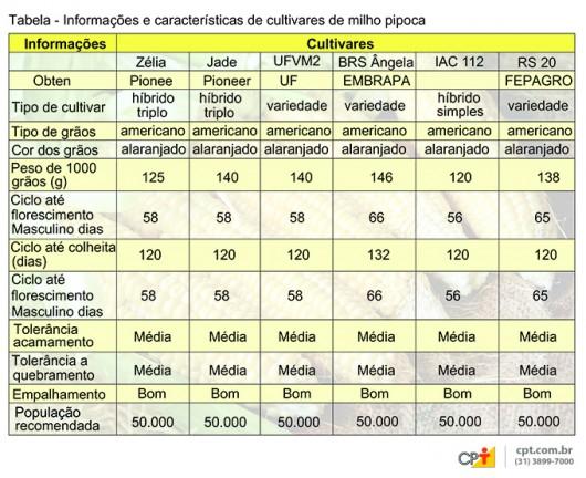 Tabela das principais cultivares do milho pipoca