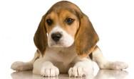 Aprenda Fácil Editora: Comprando ou Adotando um cãozinho: como escolher um filhote saudável?