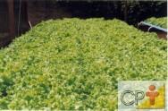 Em hidroponia as plantas crescem em um ambiente controlado possibilitando com isto, uma produção de melhor qualidade.