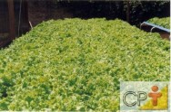 Características do cultivo hidropônico
