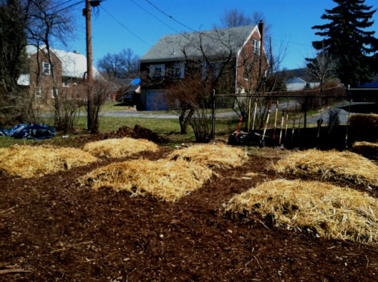 Compostagem orgânica - passo a passo para a montagem da pilha e irrigações