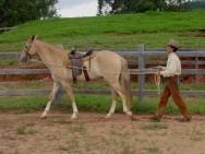 Doma de cavalos - charreteamento do equino em 6 passos